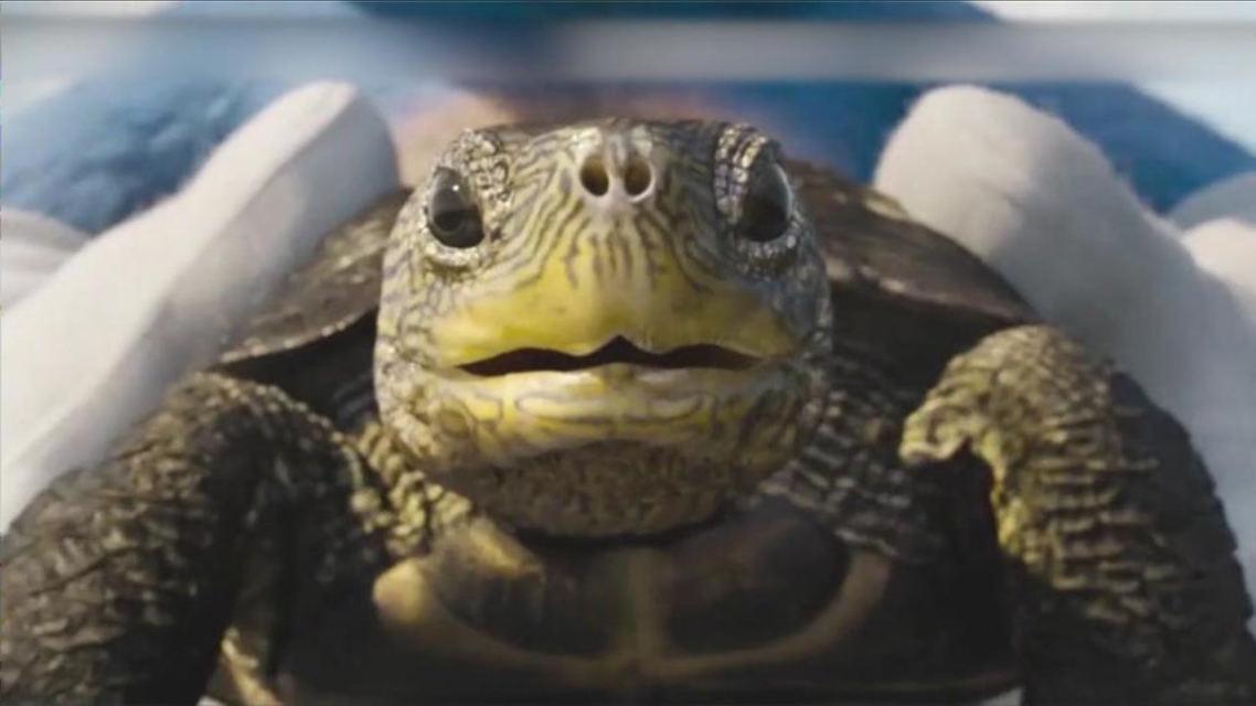 刺猬索尼克混剪乌龟这辈子可能都没这么快过竟然能跑迈